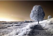 아침빛에 빛나는 오래된 나무